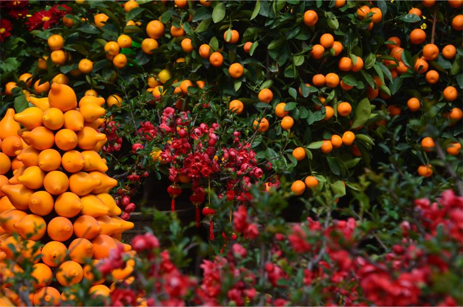 CNY flower market_13