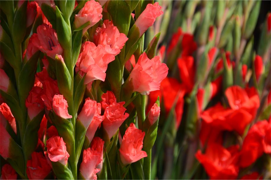 CNY flower market_16