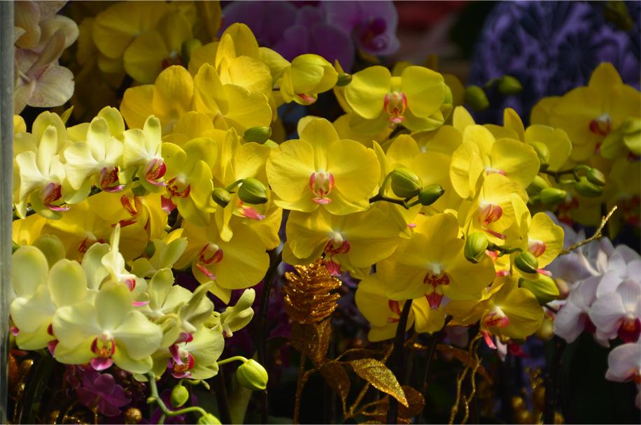 CNY flower market_2