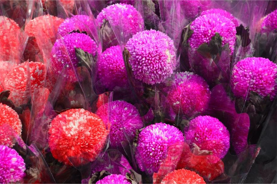 CNY flower market_3