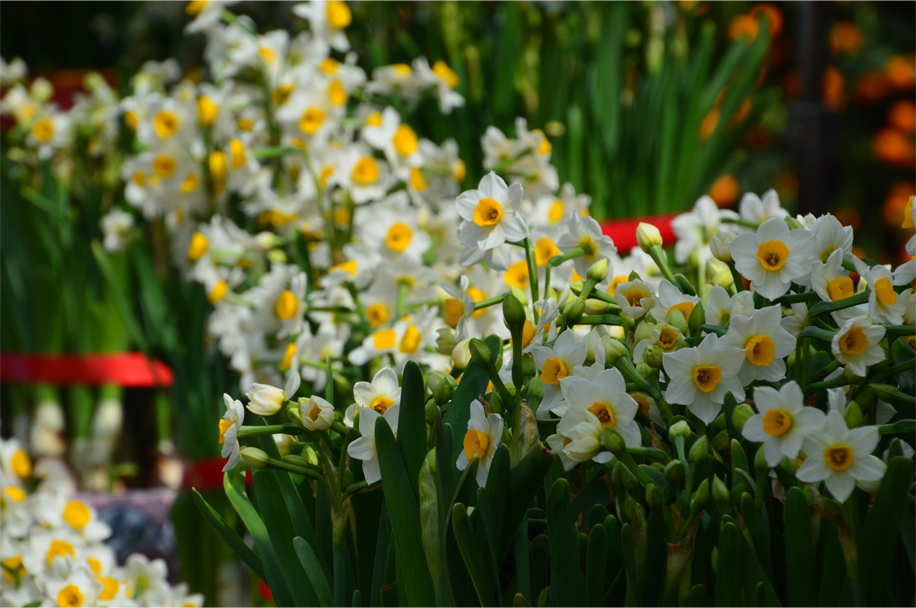 CNY flower market_5