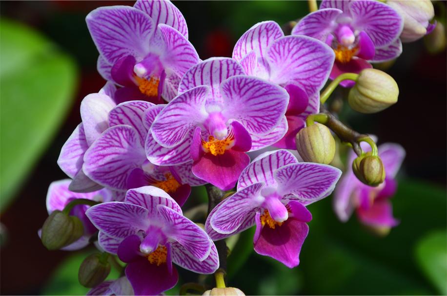 CNY flower market_9