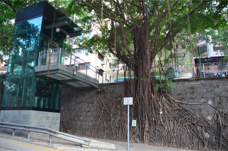 """Wall tree"", Sai Ying Pun"