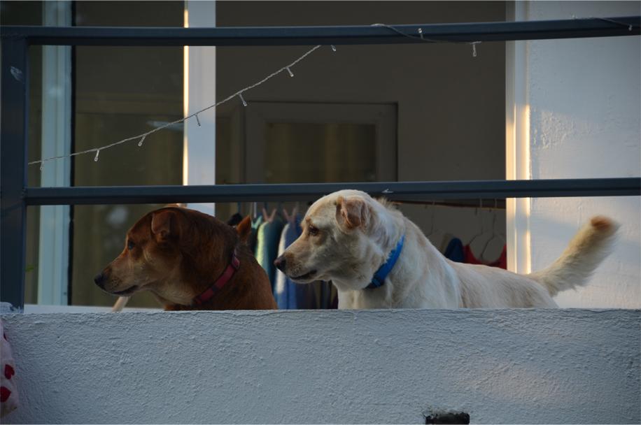 Dog days, Shek O