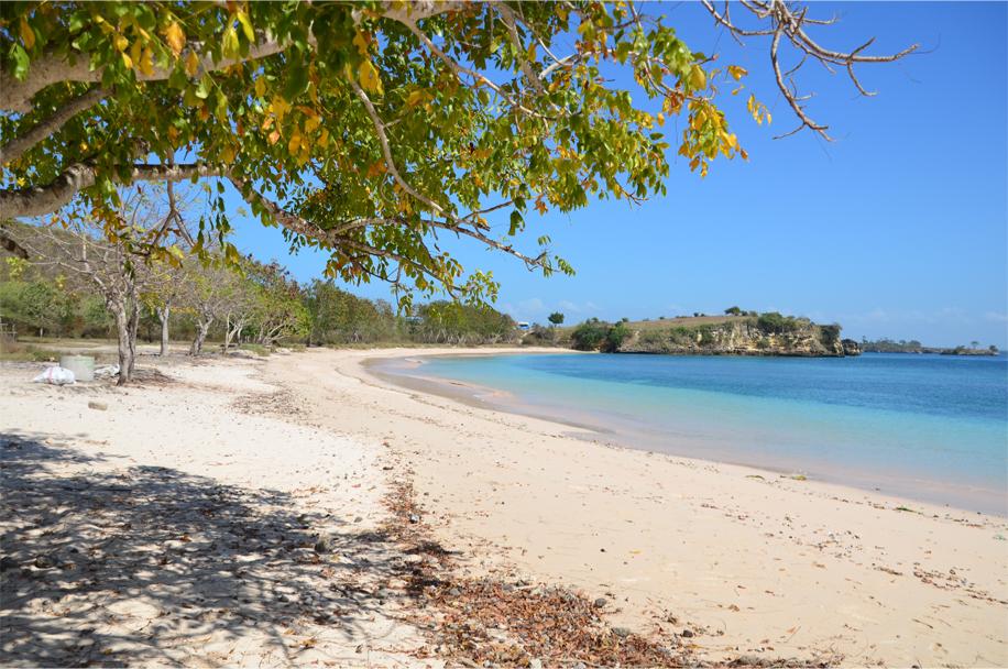 Leaf-strewn sands