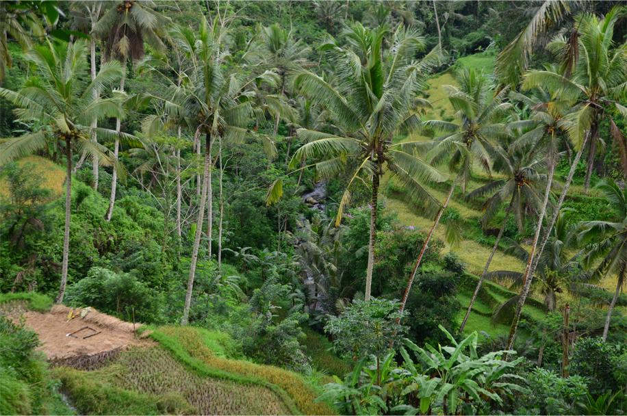 Gunung Kawi_4