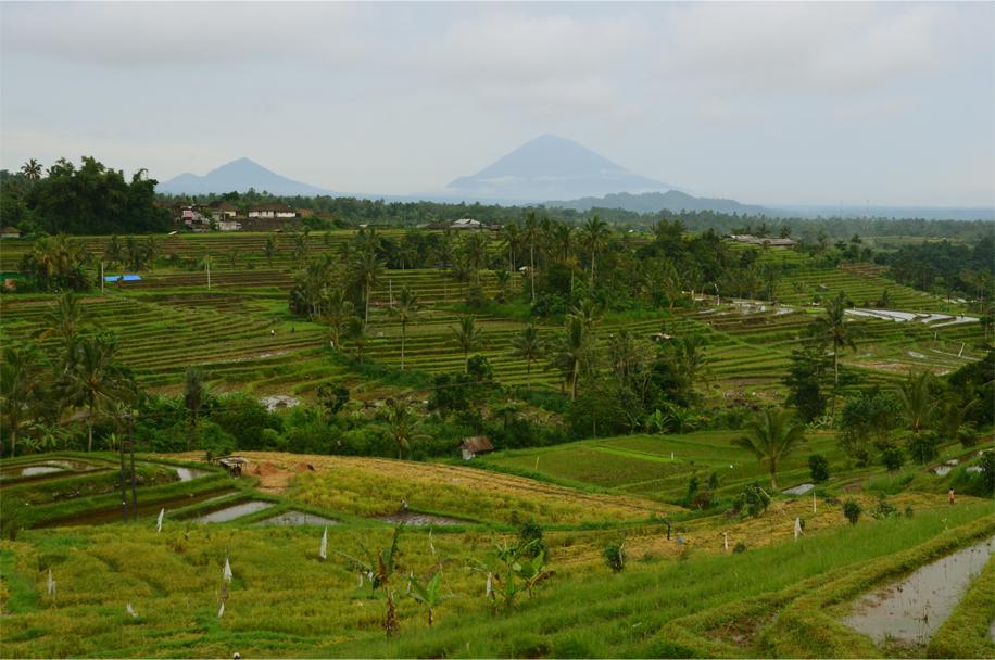 Rice terraces of Jatiluwih