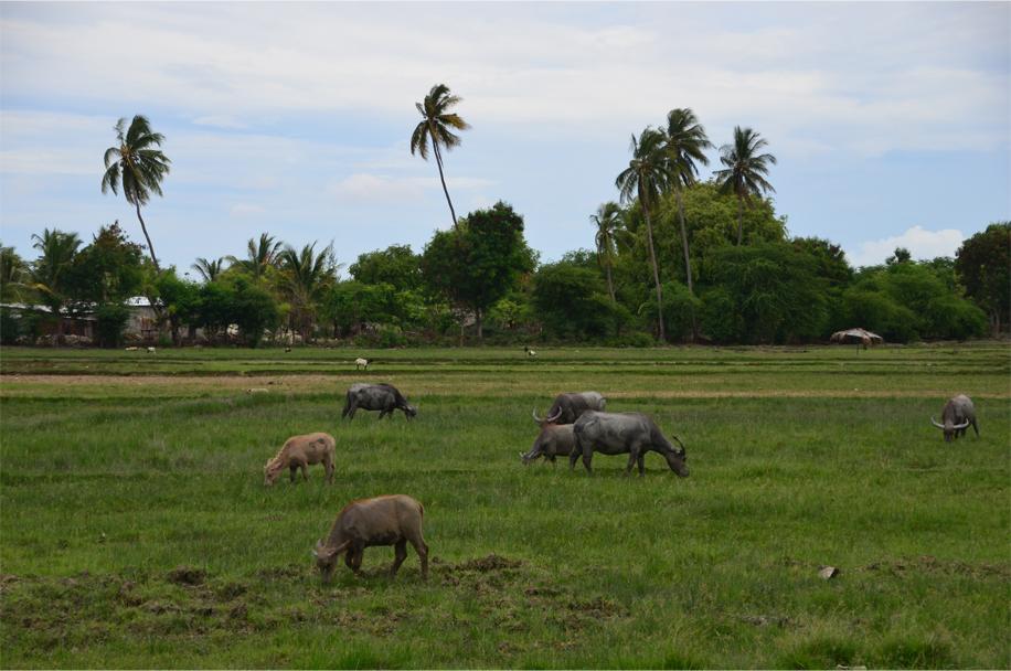 Timor Leste_11