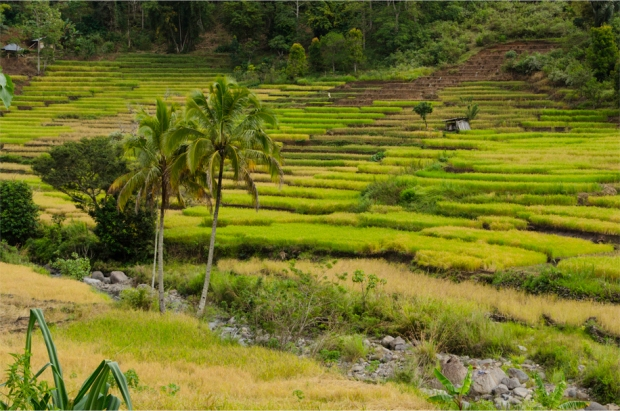 Rice terraces en route to Ende