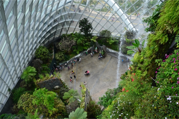 Cloud Forest_6