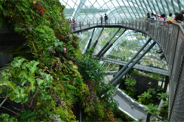 Cloud Forest_7