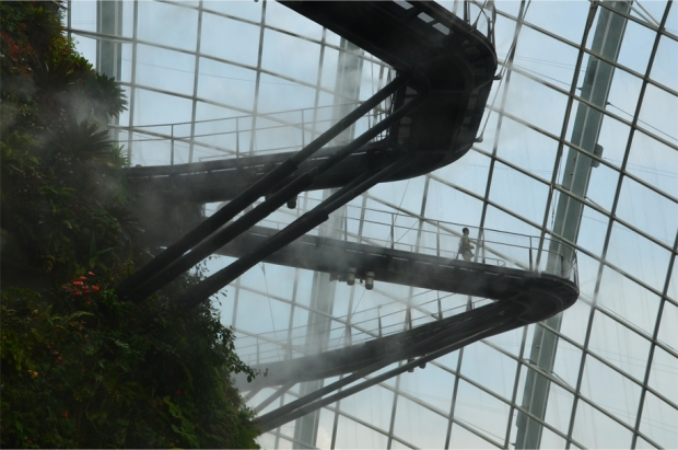 Cloud Forest_8