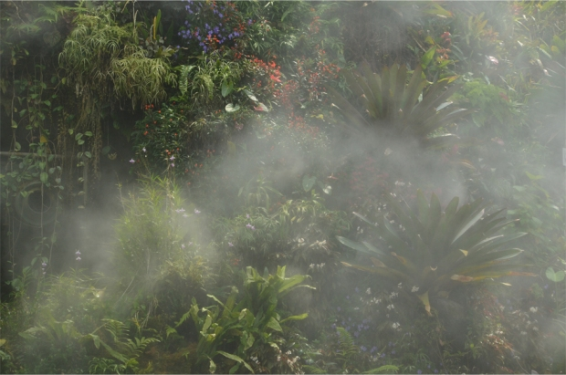 Cloud Forest_9