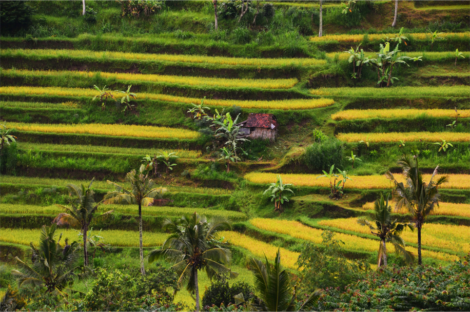 Indonesia Roundup_1